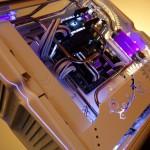 Purpura 09