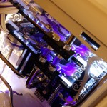 Purpura 13