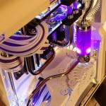 Purpura 15