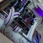 Purpura 20