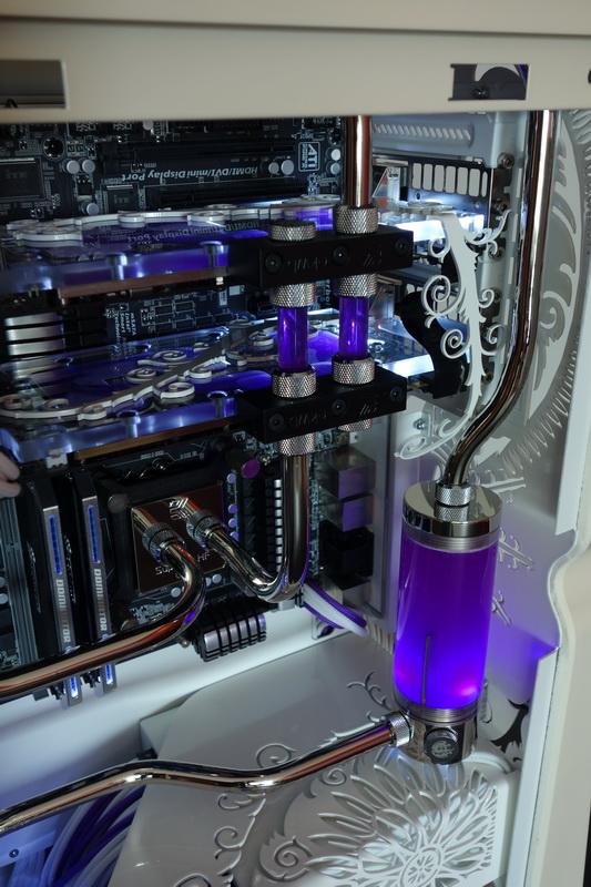 Purpura 23