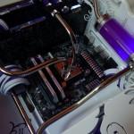 Purpura 28