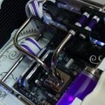 Purpura 35
